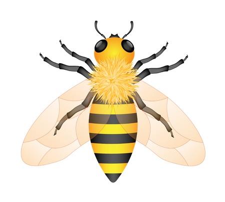 busy person: Miel de abeja Vectores
