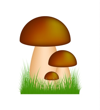 Mushrooms  boletus  standing in the grass Stock Vector - 14041480