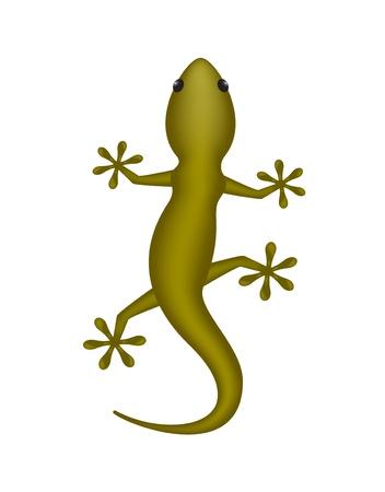 salamander: Lizard