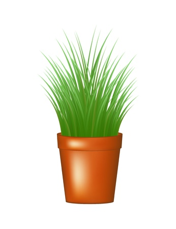 Grass in flowerpot Vector
