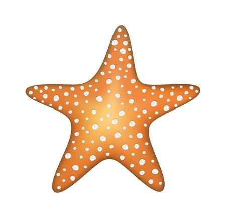 seastar: Sea star Illustration