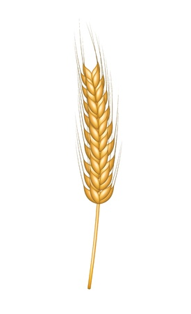 Wheat in gold design Stock Vector - 18175489