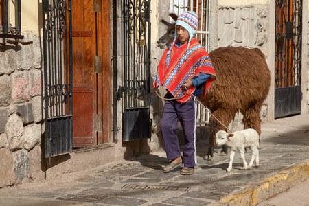 quechua: Peruvian boy walking with family of lamas on the street of Cuzco Peru