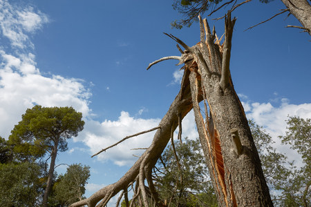 Storm damage and broken tree in the forest. Banco de Imagens