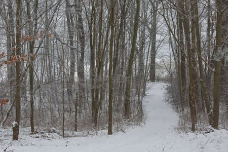 Morning winter forest landscape with a path road and freshly fallen snow. Stock Photo