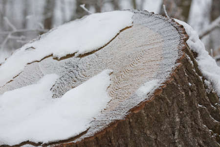 Abstract pattern detail of frozen trunk covered by snow.