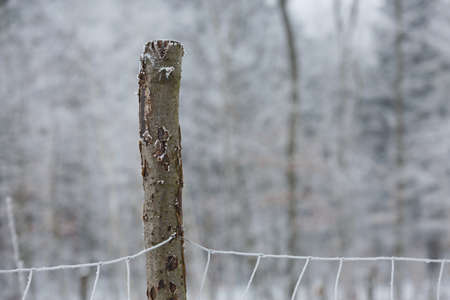 Detail of a frozen iron fence on a wooden pole during the winter in Czech republic.