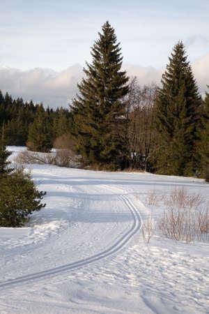Typical winter landscape
