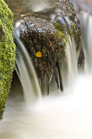 Detail of stream