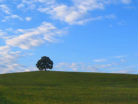 recluse: solitaire