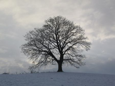 solitary tree in winter Stock Photo - 840522