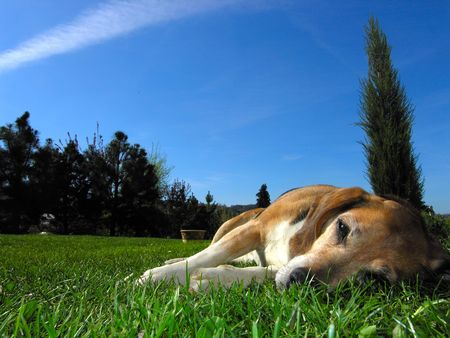 amiable: rest dog Stock Photo