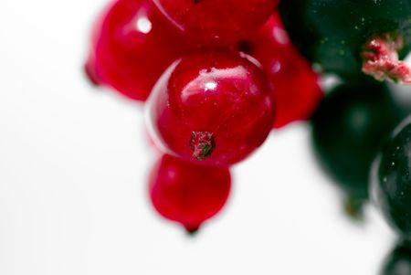 redcurrant: redcurrant
