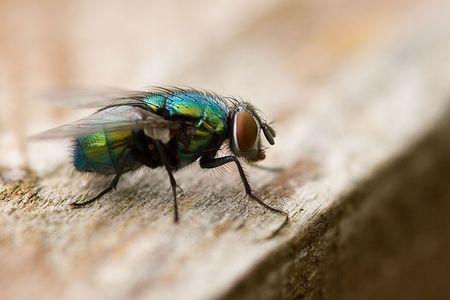 exasperation: macro shot of fly