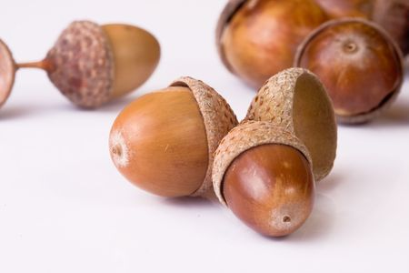 acorns Stock Photo - 3638536