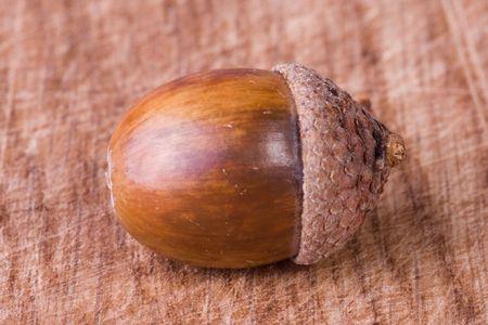 acorn Stock Photo - 3638574