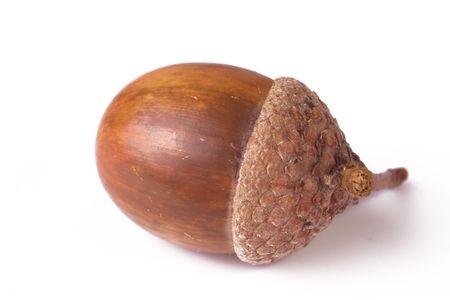 acorn isolated Stock Photo - 3638529