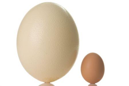 avestruz: huevo de avestruz aisladas sobre fondo blanco