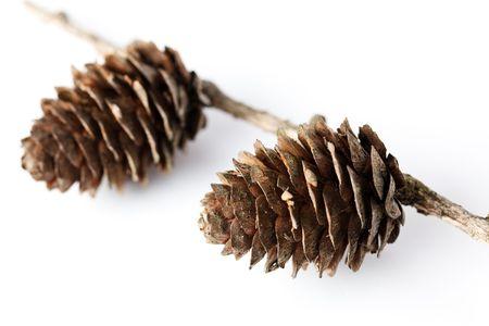 pine cone on white background Stock Photo