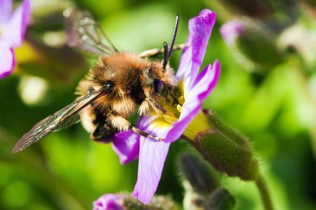 photo shot of bee on bloom photo