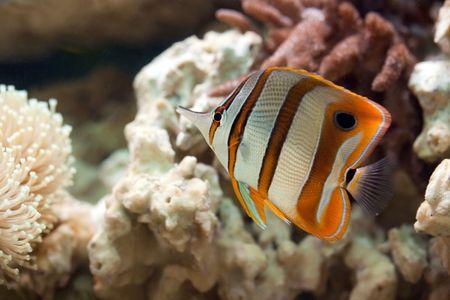 photo shot of life in aquarium Stock Photo - 6907332
