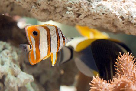 photo shot of life in aquarium photo