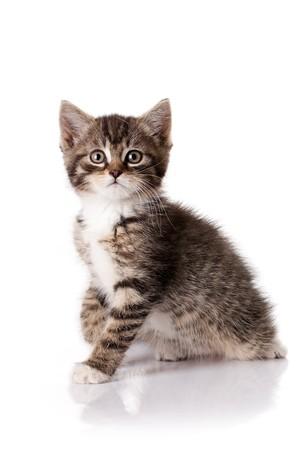 gatito poco sobre fondo blanco
