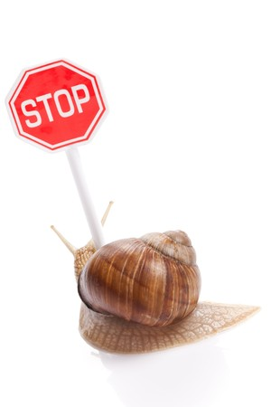 gastropod: the garden snail and stop traffic sign