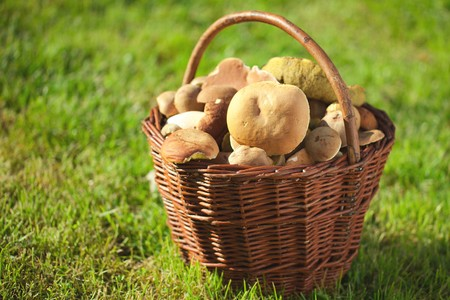 mushrooming: photo shot of mushrooms in a basket