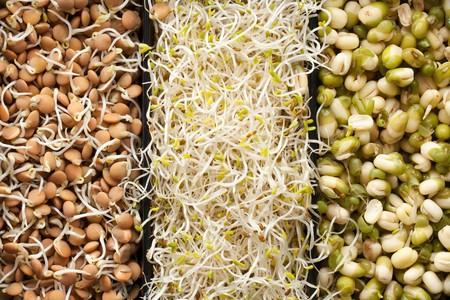 macrobiotic food photo
