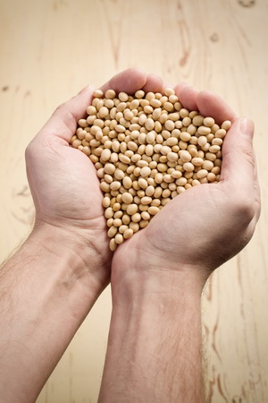 soja: la soja en manos Foto de archivo