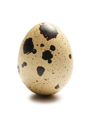 one quail egg on white background