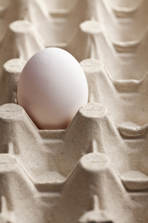 the white egg in carton photo
