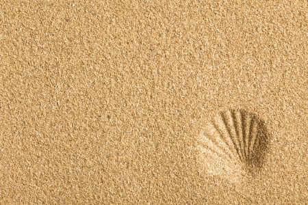 the shell imprinted on the sand
