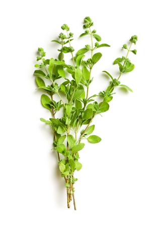 sprig: sprig of marjoram on white background