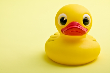 squeak: yellow bath duck on yellow background Stock Photo