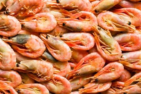 crustacea: top view of the shrimps