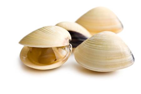 frische Muscheln auf weißem Hintergrund