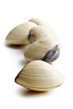 fresh clams on white background photo