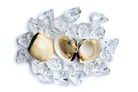 top view of fresh clams in ice cubes photo