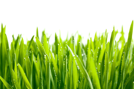 the green grass with water drops photo