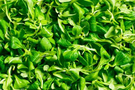 cornsalad: texture of corn salad, lambs lettuce  Stock Photo