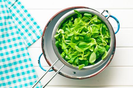 cornsalad: the corn salad, lambs lettuce in colander Stock Photo