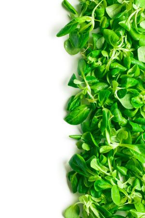 vegetables white background: corn salad, lambs lettuce on white background