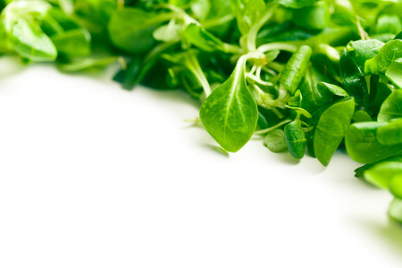 corn salad, lambs lettuce on white background photo