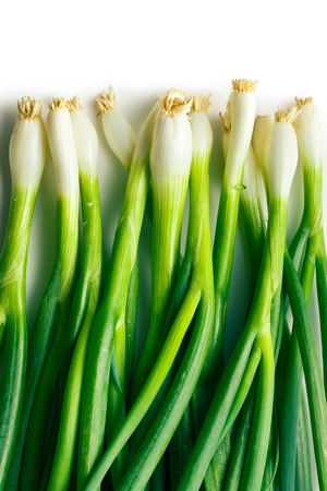 bulb and stem vegetables: fresh spring onion on white background