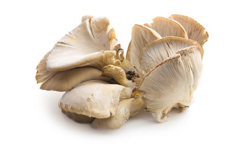 ostra: Seta de ostra en el fondo blanco