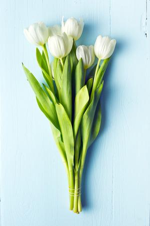white tulip: white tulip on blue wooden table Stock Photo