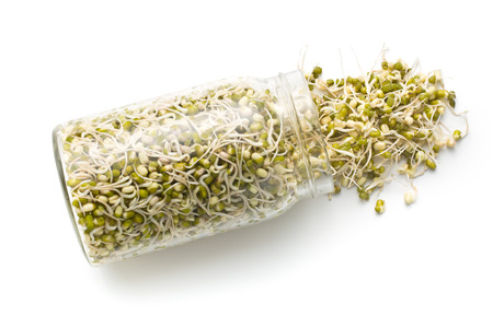 sprouted: Sprouted mung beans in jar