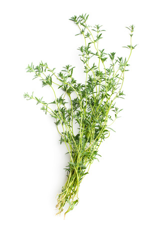and savory: Fresh savory bunch on white background